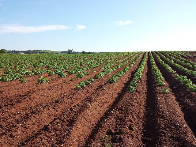 Ubezpieczenie upraw rolnych w Vleasing